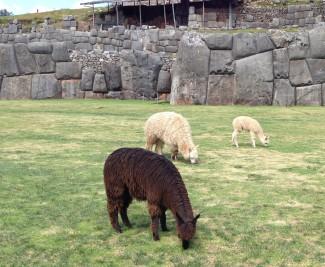 Sacsayhuaman Ruins Cusco, Peru