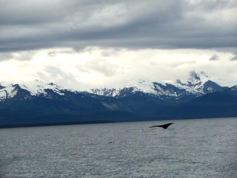 Humpback whale in Juneau, Alaska