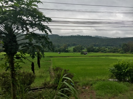 The view while driving to the Elephant Jungle Sanctuary in Chiang Mai, Thailand
