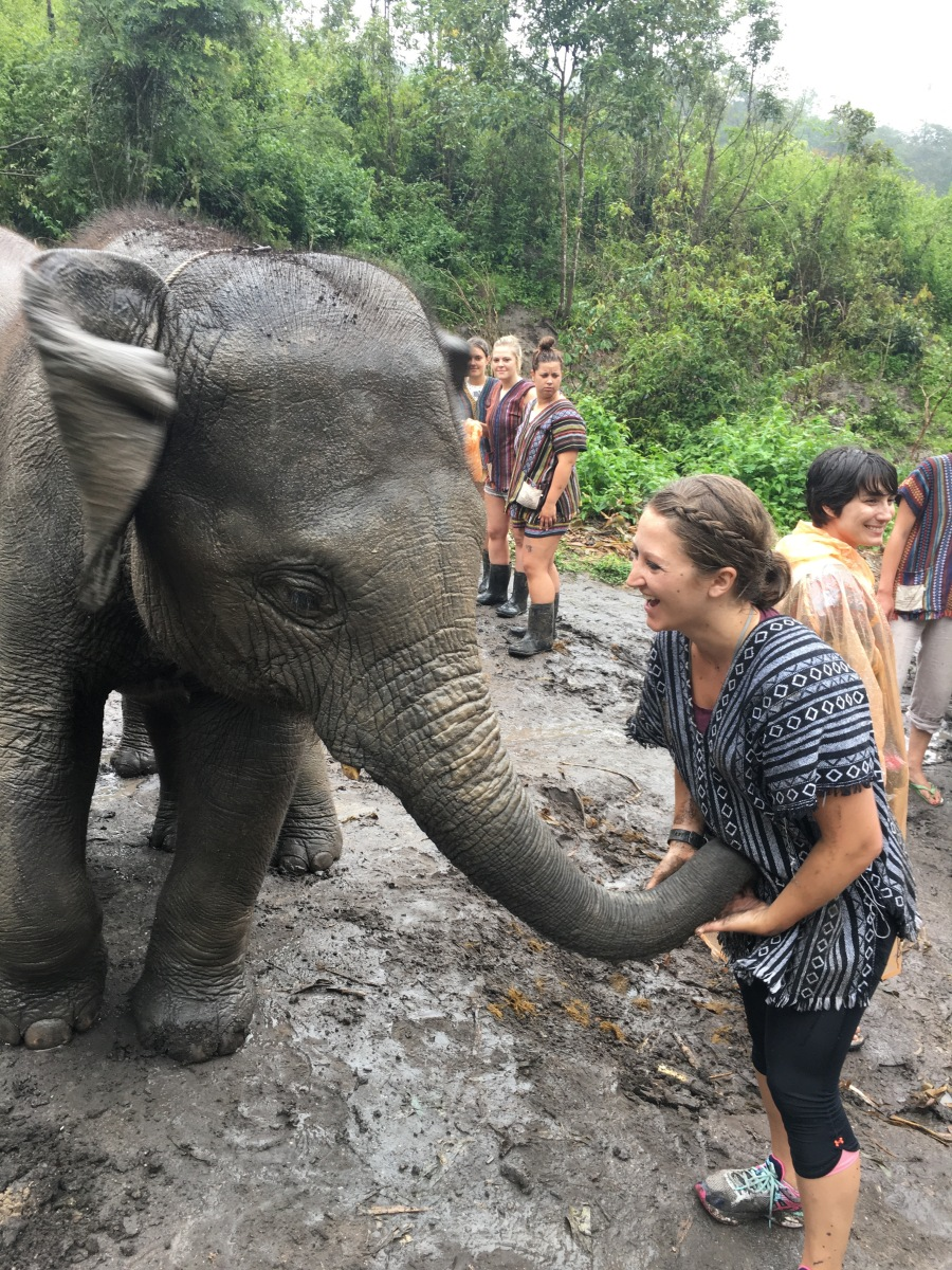 Elephants trying to steal my bananas at the Elephant Jungle Sanctuary outside of Chiang Mai, Thailand