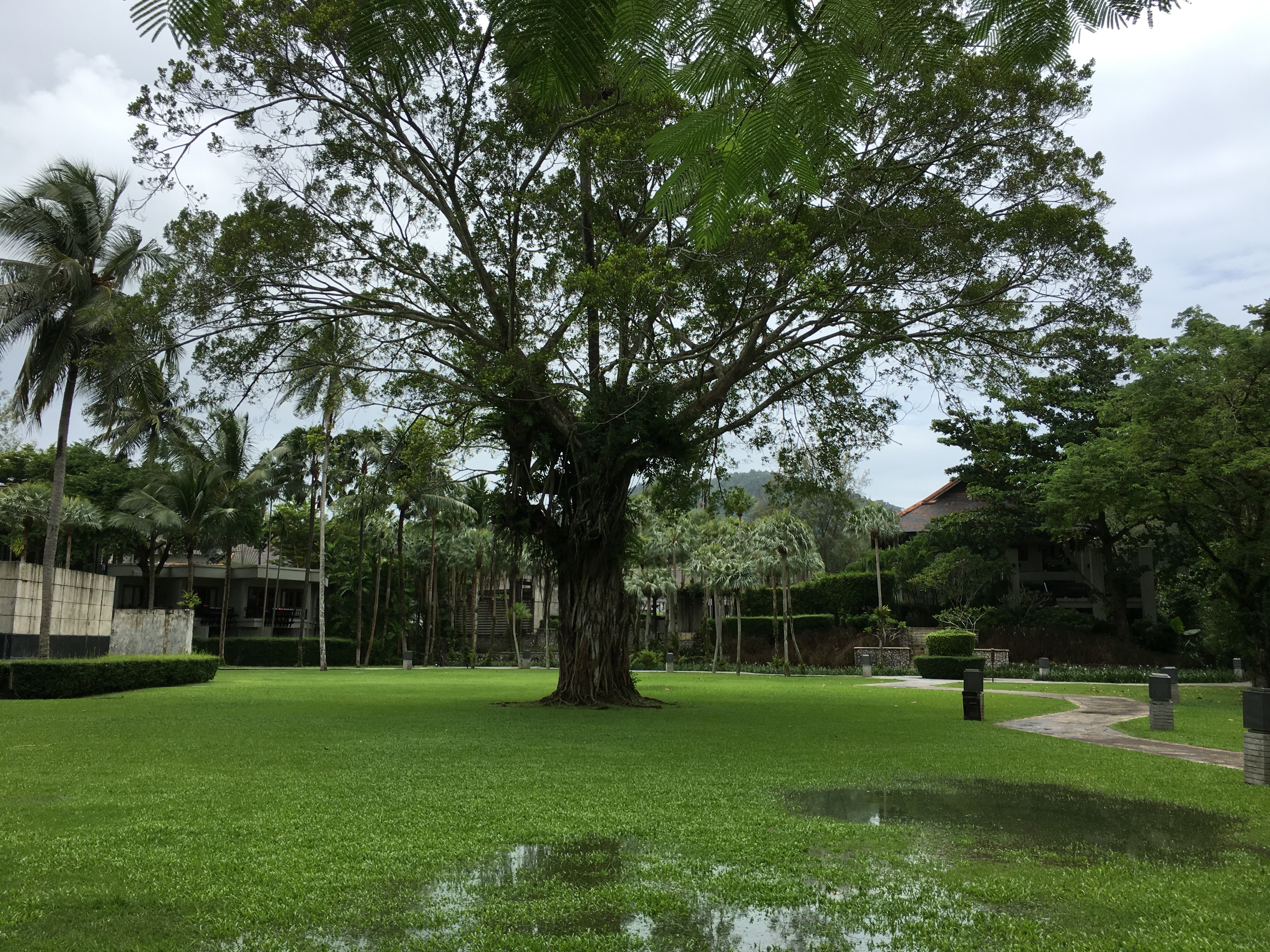wandering the grounds at the slate hotel in phuket thailand