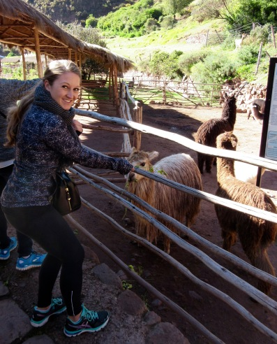 Awana Kancha llama farm, Cusco Peru