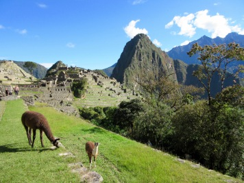 Alpacas atop Machu Picchu, Peru
