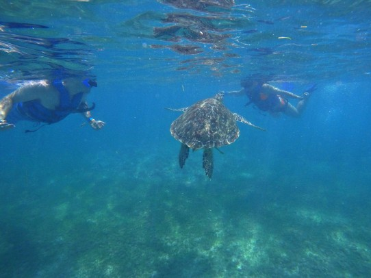Getting up close and personal with a sea turtle in Mexico