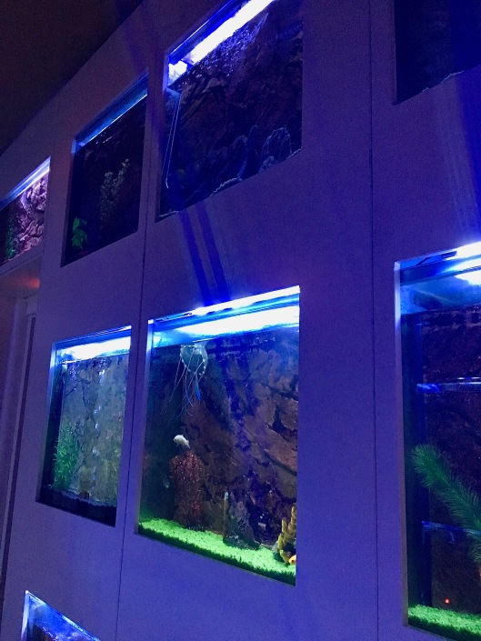 Jelly fish tanks at the Spagna Royal Suites in Rome, Italy
