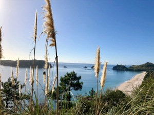 The view from our hike to Cathedral Cove in New Zealand