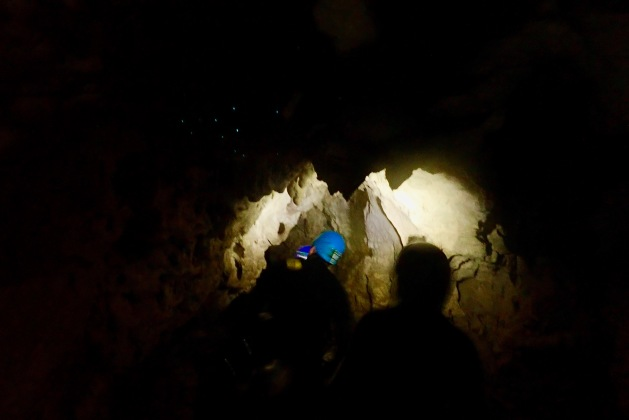 Glow worms in the caves during the Black Labyrinth Tour in Waitomo, New Zealand
