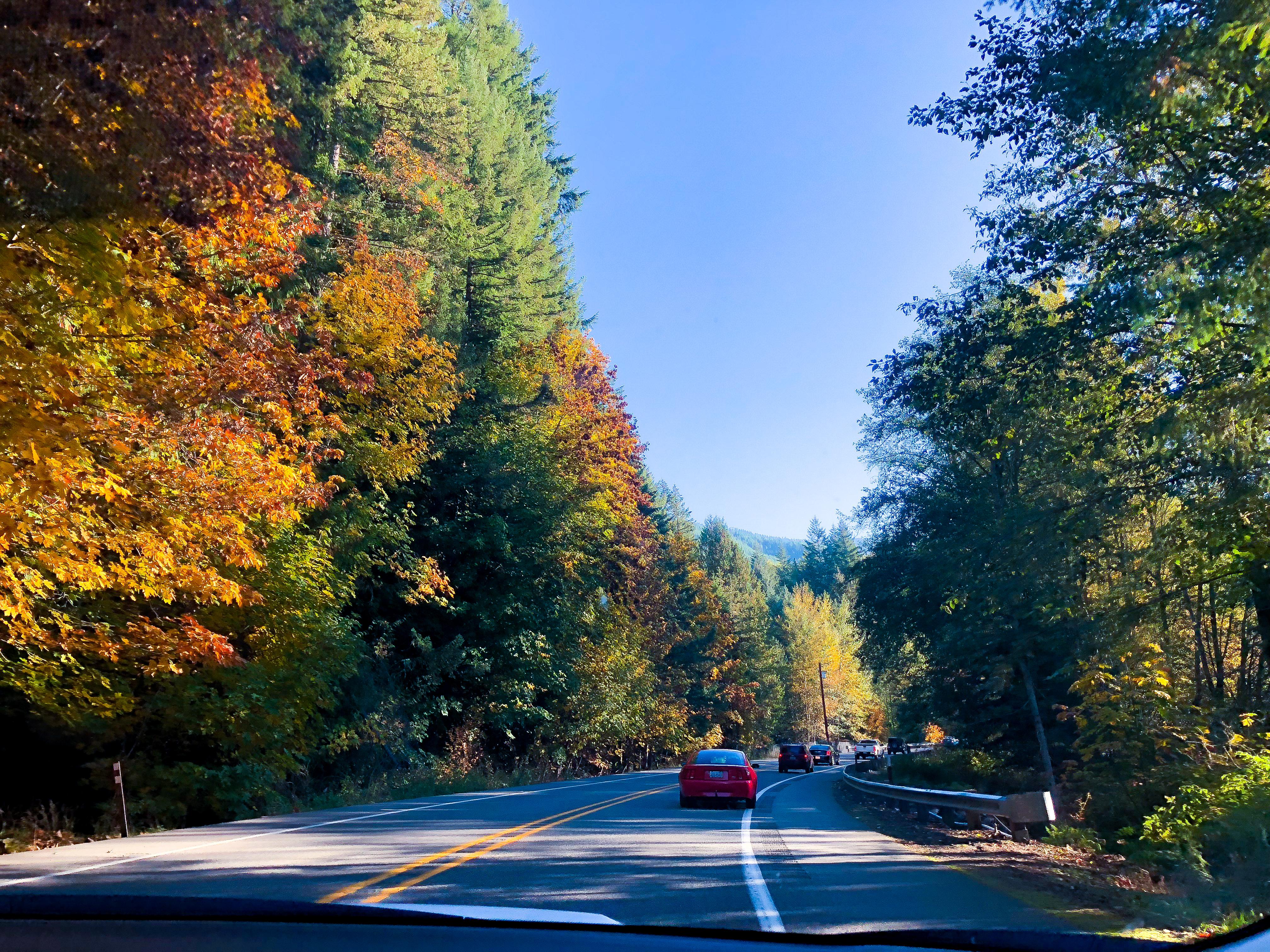 The drive to Mt. Rainier in Washington